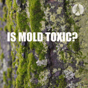 Mold Toxicity